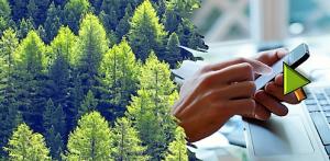 Wald und Bildschirm